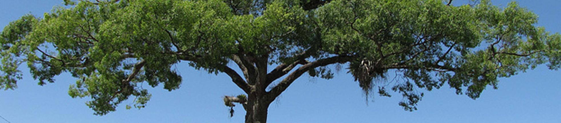 Fonte da imagem: http://www.bebidaexpressblog.com.br/sem-categoria/madeiras-utilizadas-para-conservar-cachaca